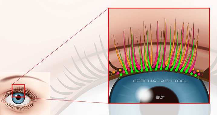Eyelashes grows in three layers